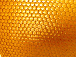 honeycomb 530988_64